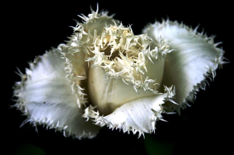 tulip-180595_960_720